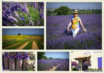 1 Provence