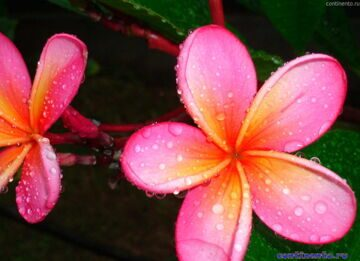 flower in Tanah Lot