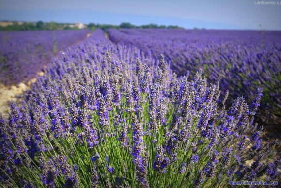 Provence (48) 0